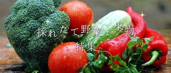 取立て野菜・果物特集